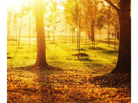Sonnenaufgang Bild