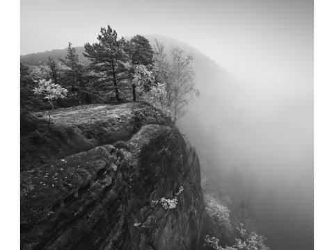 Symphony of Fog - S
