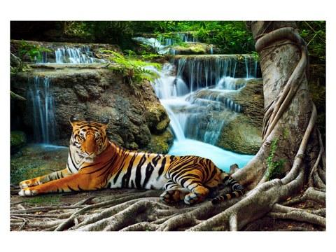 Tiger Bild