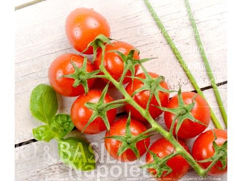 Tomate Basilikum Bild