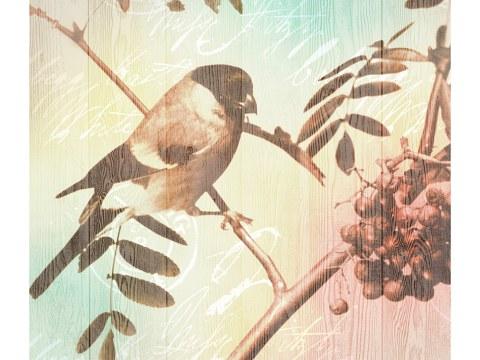 Vogel Bild