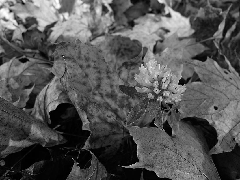 Schwarz-Weiß Bild ohne Kontraste