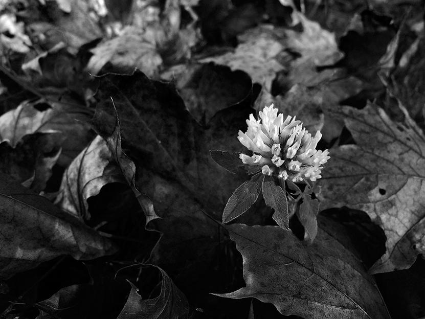 Schwarzweiß Fotografie richtig gemacht