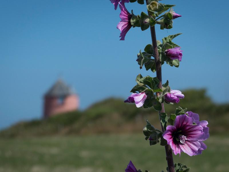 Urlaubsfoto Winkel Blume weit