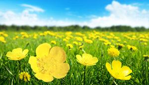 Weitwinkel-Modus Blumen Foto