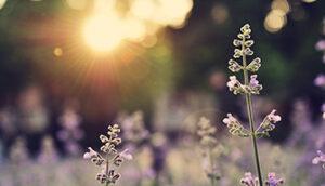 Gegenlicht Fotografie Blüte