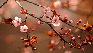 Schärfe Blüte an Ast