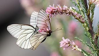 luchtdistanz Schmetterling Foto