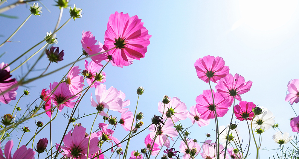 Teaser Blüten Makrofotografie
