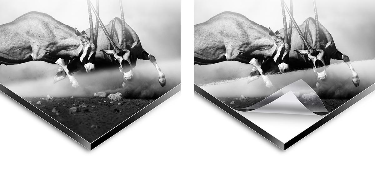 Alu Dibond Direktdruck | WhiteWall