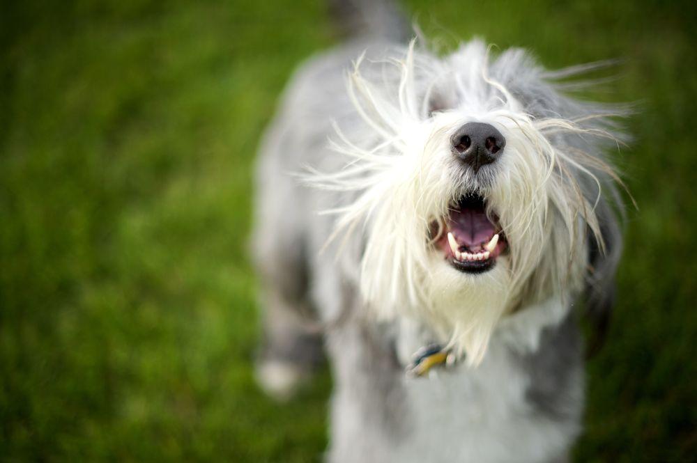 Nasenspitze von Hund