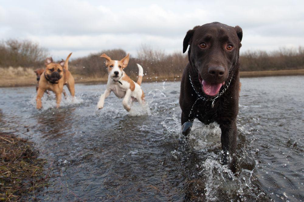 3 Hunde auf Kamera zulaufend