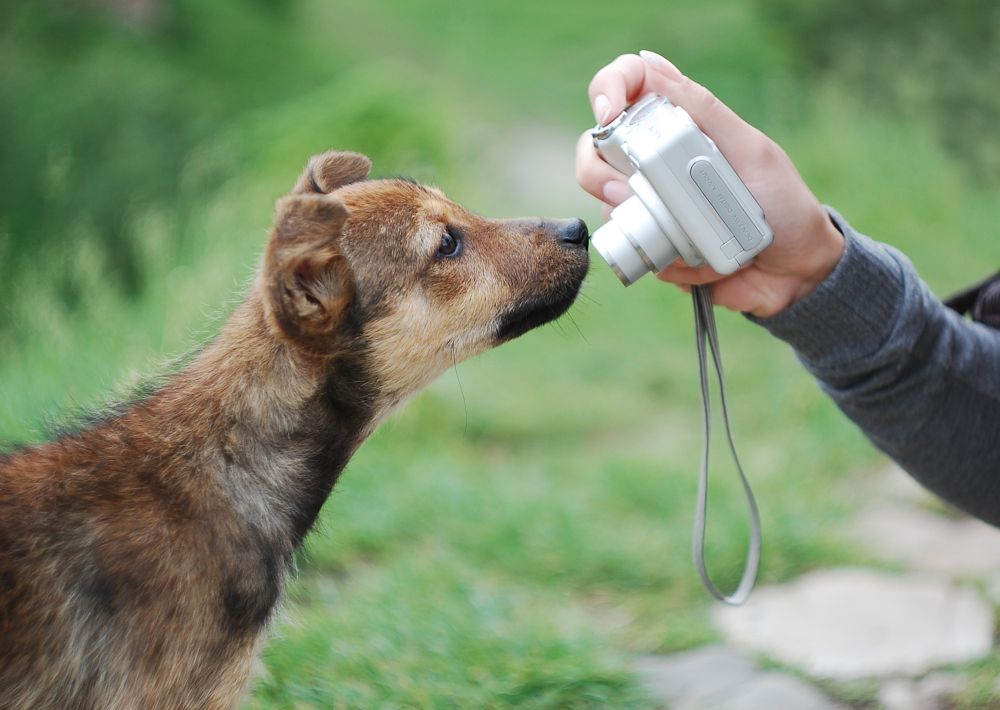 Hundewelpe schnüffelt an Kamera