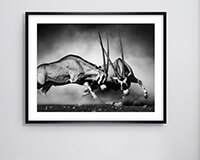 Schwarz-weiß Bild