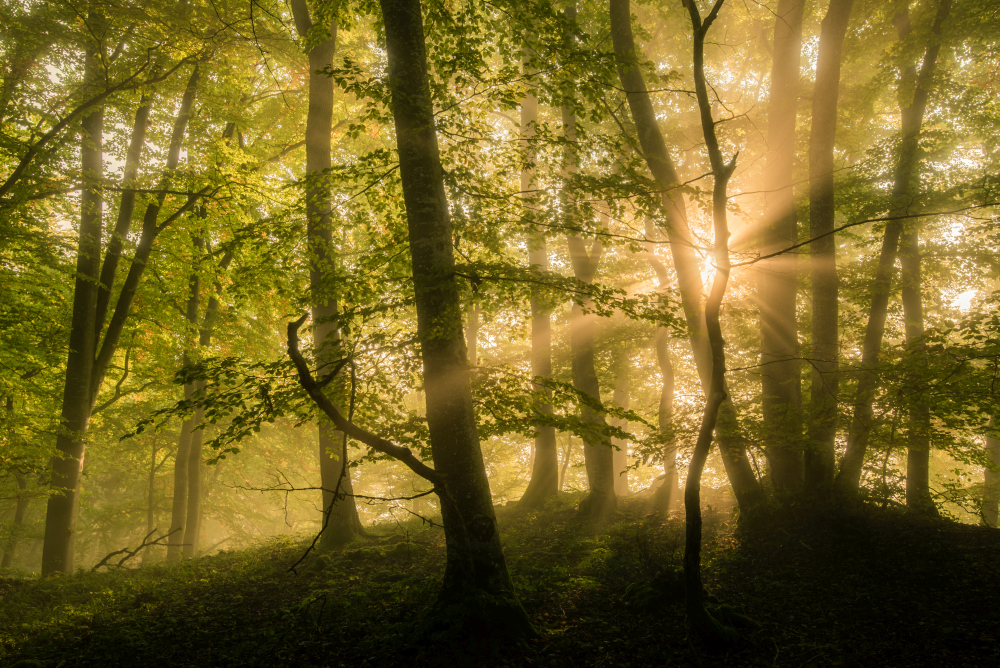 Nebelfoto Wald