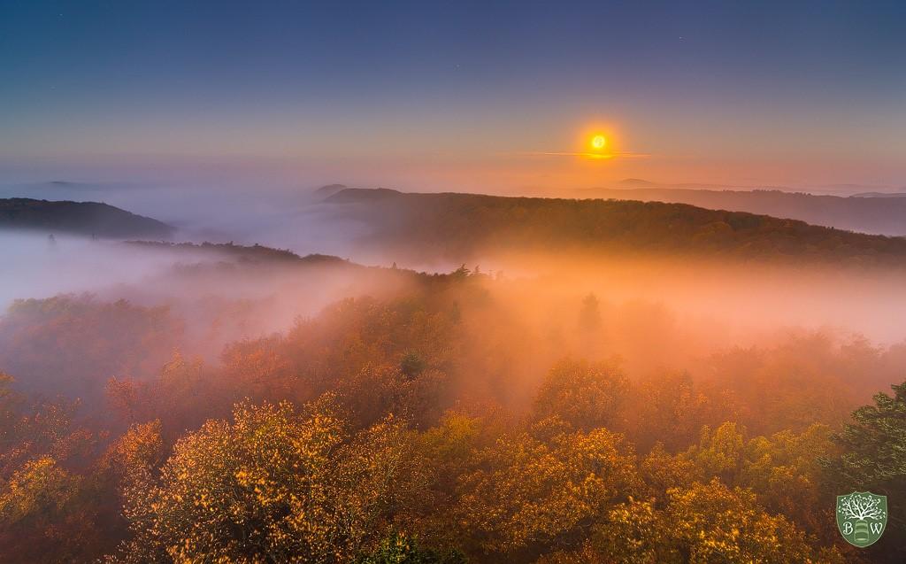 Nebel fotografieren: Tipps für außergewöhnliche Fotos