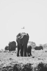 Botswana Safari Wildlife Photography Elefants bird