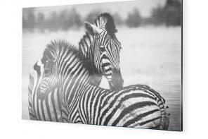 Wildlife Photography – Was Sie wissen sollten